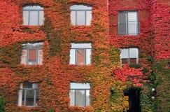 Automn Монреаля стоковое изображение rf