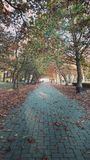 Automn allee. Falling leaves in the park Stock Photos