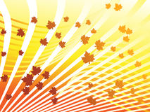Automn background Stock Image