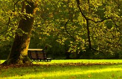 Automn Bench Stock Photography