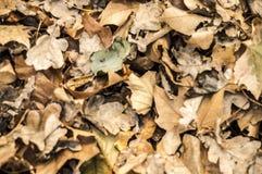 Automn-Blätter Stockfotografie