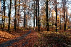 Free Automn Colors In The Sonian Forest Stock Photography - 140367132