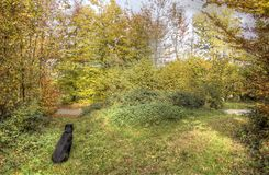 Automn dog Stock Images