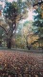 Automn en parc Images libres de droits