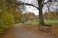 The autumn in the forest Stock Photography