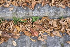 Automn leaves Royalty Free Stock Photography