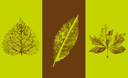 Automn leaves banner Royalty Free Stock Image