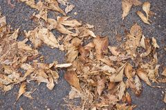 Automn leaves Royalty Free Stock Photos