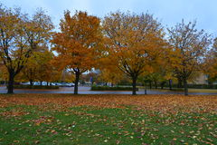 Automn Royalty Free Stock Image