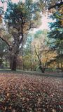 Automn in park. Falling leaves in the automn park Royalty Free Stock Images