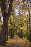 Automn park walk 2. A couple walking in yellow automn park Royalty Free Stock Photo