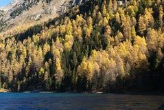 Automn skog i nedgångfärger Arkivfoton