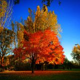 Automn tree Royalty Free Stock Photos