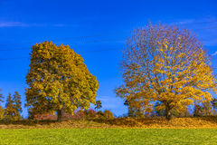 Automn Royalty Free Stock Photography