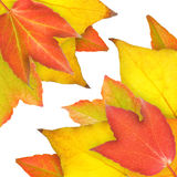 Automnal. Red, yellow and orange leaves in fall Stock Photos