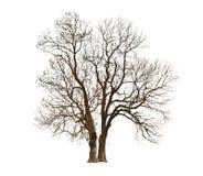Automne光秃的树 库存图片