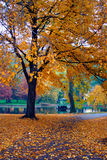 Automne à Boston Photos libres de droits
