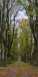 automne Παρίσι Στοκ φωτογραφία με δικαίωμα ελεύθερης χρήσης