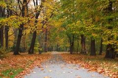 automne Photo libre de droits