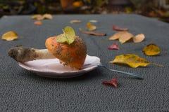 Automne amanite agréable sur la table photographie stock libre de droits