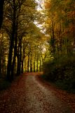 Automne au Luxembourg images stock
