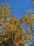 Automne au Michigan – 04_10_2_001 Image libre de droits
