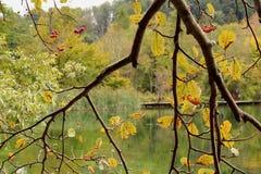 Automne au parc national de lacs Plitvice en Croatie - un lac vu par des branches d'arbre avec des feuilles d'automne images libres de droits