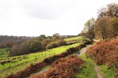 Automne au Pays de Galles Image stock