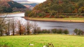 Automne au réservoir de Ladybower, Derbyshire photographie stock libre de droits