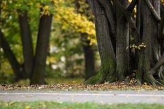 Automne/automne en stationnement Images libres de droits