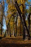 Automne avec les arbres d'or, sources de Clitunno Image libre de droits