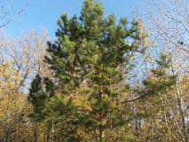 Automne, ciel, bleu, feuilles, vert, fond, arbres, jaune, lumineux, nature, forêt, été, naturel, usine, feuille, arbre, parc, le  photographie stock libre de droits