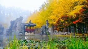 Automne coloré à l'île de Nami, la Corée du Sud photographie stock libre de droits