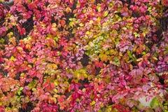 Automne coloré Photographie stock