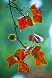 Automne coloré Photo stock