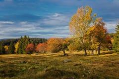 Automne coloré en beau parc national tchèque Sumava - Europe photos libres de droits