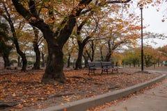 Automne coloré en parc Images libres de droits