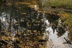 Automne coloré nature saisons Bel arbre d'automne avec les feuilles sèches tombées Photo stock