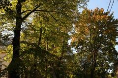 Automne coloré nature saisons Bel arbre d'automne avec les feuilles sèches tombées Image libre de droits