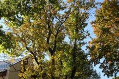 Automne coloré nature saisons Bel arbre d'automne avec les feuilles sèches tombées Images libres de droits