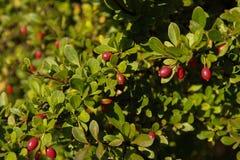 Automne coloré nature saisons Bel arbre d'automne avec les feuilles sèches tombées Images stock