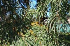 Automne coloré nature saisons Bel arbre d'automne avec les feuilles sèches tombées Photos stock
