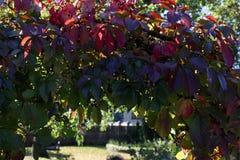Automne coloré nature saisons Bel arbre d'automne avec les feuilles sèches tombées Photographie stock libre de droits