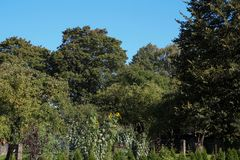 Automne coloré nature saisons Bel arbre d'automne avec les feuilles sèches tombées Photos libres de droits