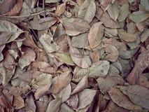 Automne coloré tombé entraînant la forêt sèche de feuilles dedans pour le fond photos stock