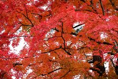 Automne color? au Japon photos libres de droits