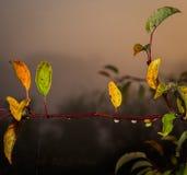 Automne commençant les feuilles colorées Photographie stock