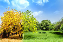automne contre le concept de ressort Image stock