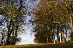 Automne d'or égalisant la lumière du soleil sur des arbres en parc image stock