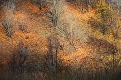 Automne d'or Images stock